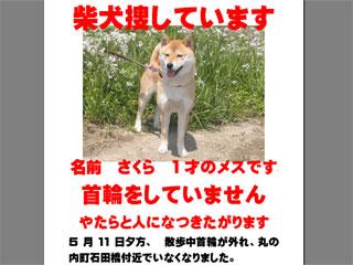 050511sakura.jpg