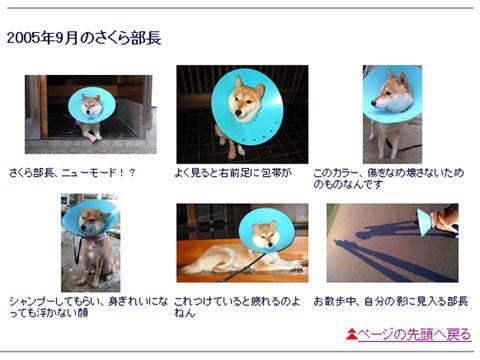 051009sakura.jpg