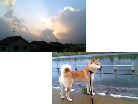 051107sakura.jpg