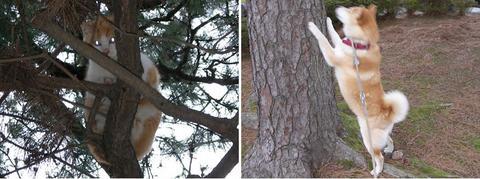 樹上の猫さんとさくら部長