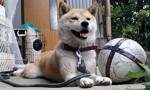 サッカーボールとさくら部長