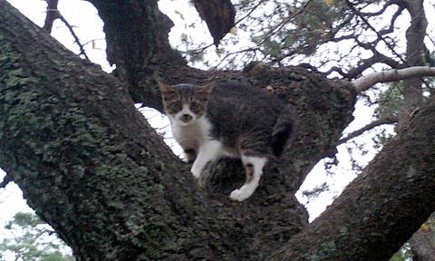 窮猫木に登る
