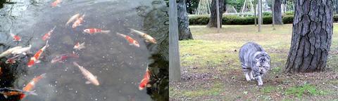 1月4日の芦城公園