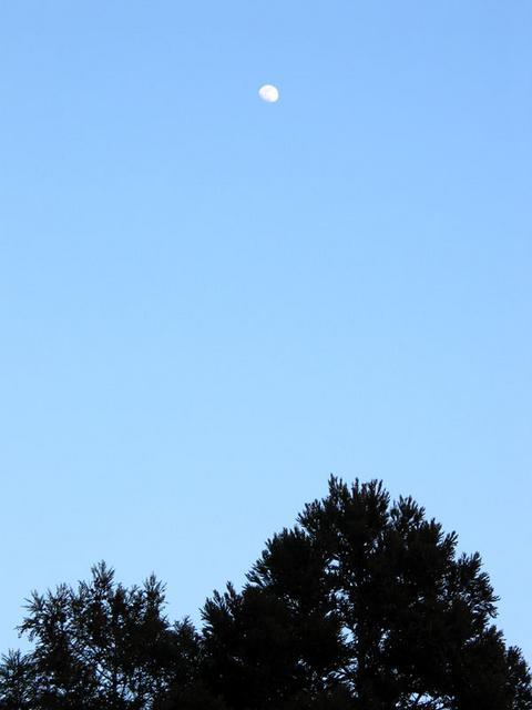 真冬の真昼の月