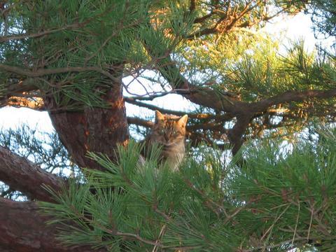 樹上の仔猫さん