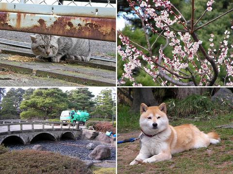 3月13日の芦城公園
