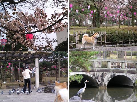 3月末の芦城公園