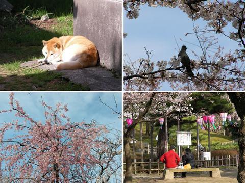 4月5日の芦城公園