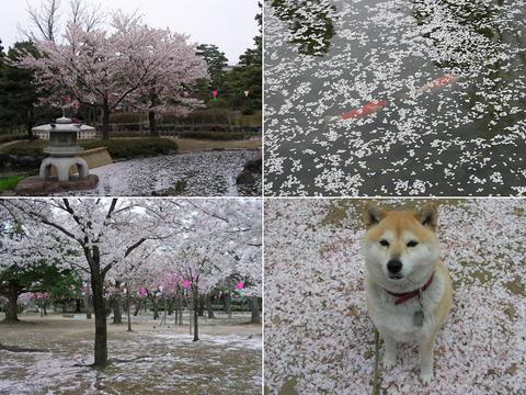 桜散る芦城公園