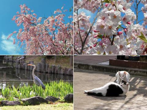 4月19日の芦城公園