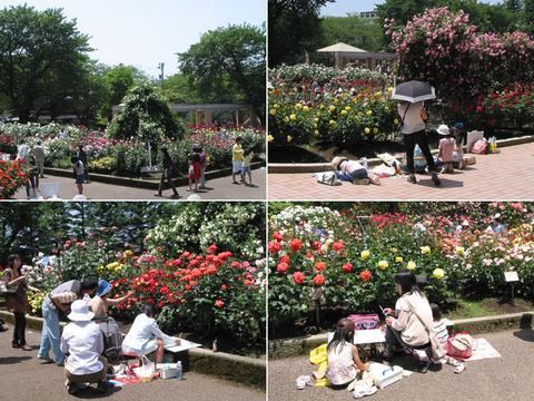 金沢南総合運動公園のバラ園、写生会の風景