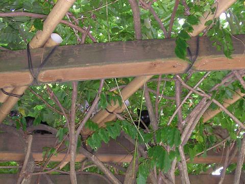 リアル「猫の隠し絵」