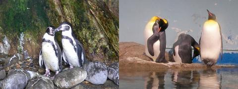 夏バテペンギン