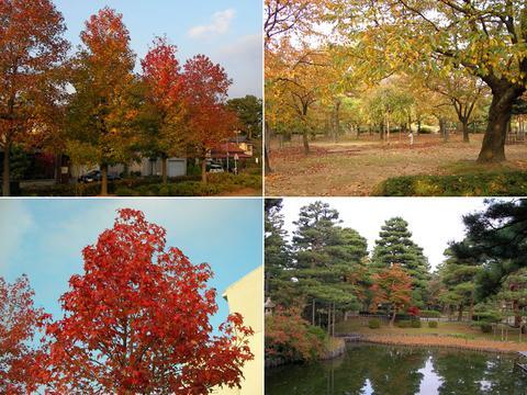 11月10日の芦城公園