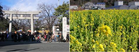 三嶋大社前と韮山の菜の花畑