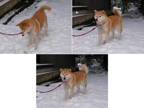 雪が大好き、さくら部長