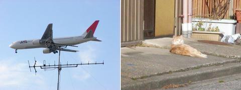 飛行機と猫さん