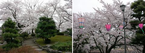 芦城公園のさくら山