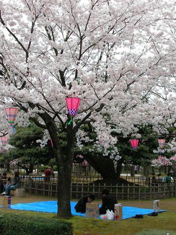 桜満開の芦城公園