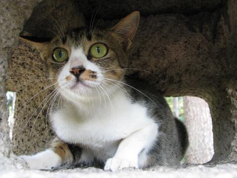 芦城公園の猫さん