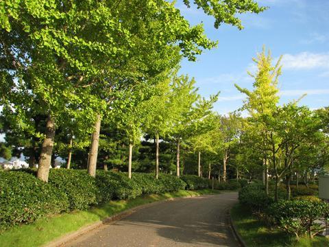 末広緑地の遊歩道