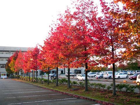 芦城公園の紅葉