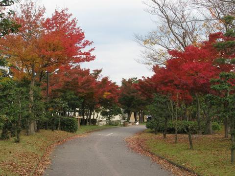 末広緑地の紅葉
