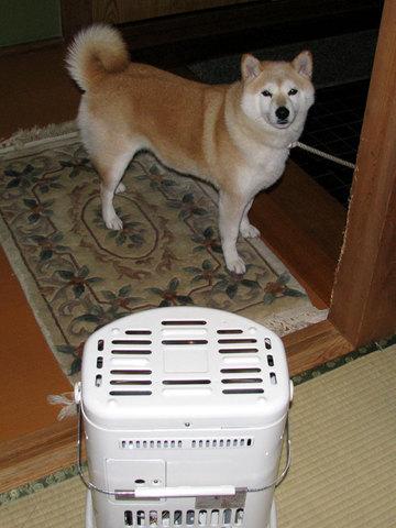 さくら部長、ストーブの前で暖を取るの図