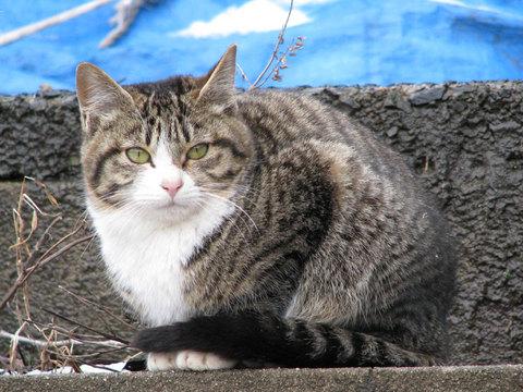 能登の猫さん