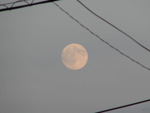 夕方のお月さま
