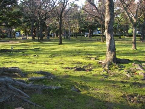 鮮やかな苔のじゅうたん