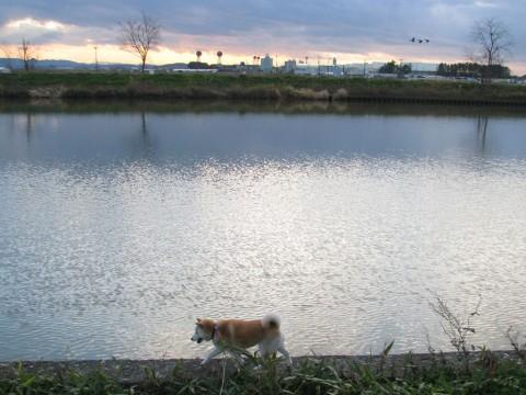 川沿いをお散歩中