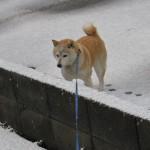 雪大好き! さくら部長