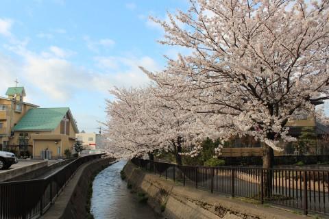御経塚 馬場川沿いの桜並木