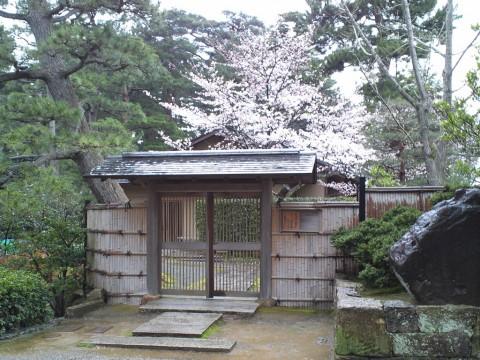 芦城公園 桜三分咲き